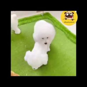 why do you need a dog mating doll for your puppy |offloaddogsboner realistic dog sex dolls
